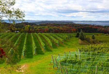 Vineyard field in Old Mission Peninsula Michigan in the Autumn Stock Photo