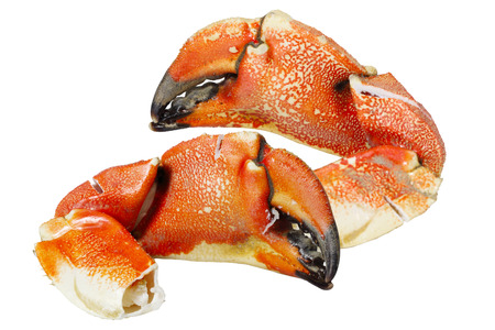 Pacific Rock Crab Claws isolated on white background