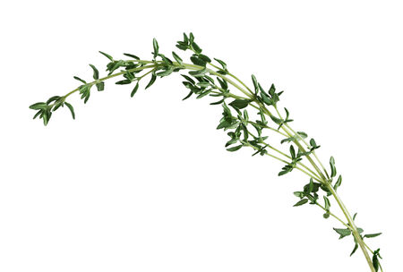 Sprig of fresh thyme leaf isolated on white