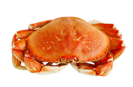 Cooked Dungeness crab isolated on white background photo