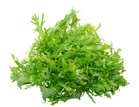 Fresh frisee chicory leaves isolated on white background