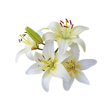 Fresh white lily flowers branch isolated on white Фото со стока