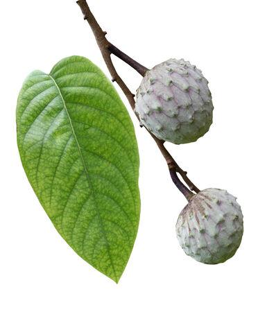 chirimoya: Raw Cherimoya Fruit isolated on white background