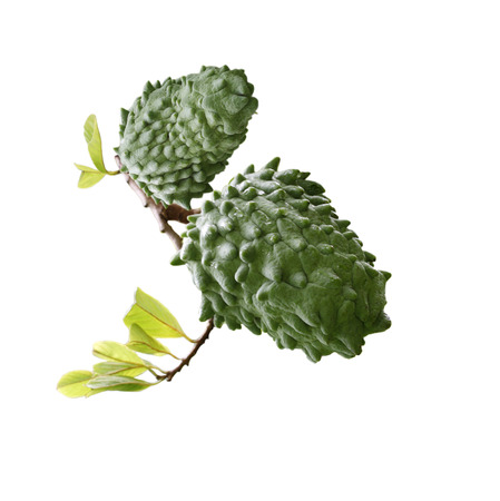 anona: Annona Muricata soursop fruit isolated on white background