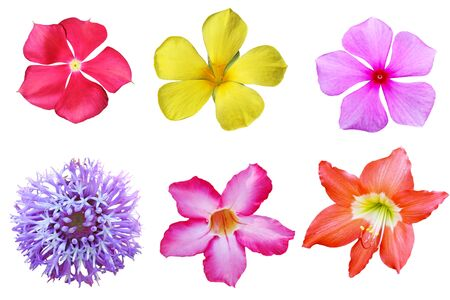 Set of tropical flowers isolated on white background