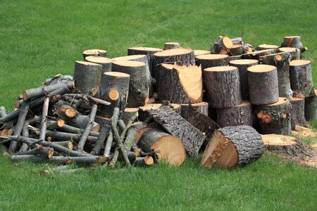 alder tree: Cut Pine wooden logs over green grass