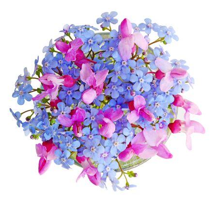 flores moradas: No olvidéis de mí y flor del redbud aislados sobre fondo blanco
