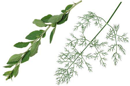 pinnately: Set of vegetable herb leaf isolated on white background