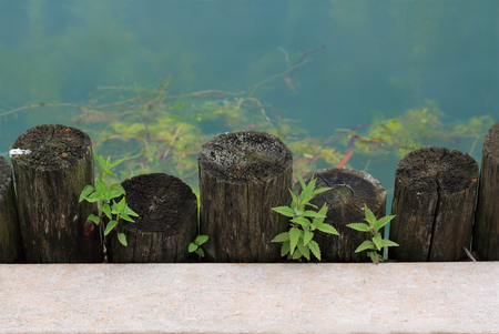 Water, wood, plant, concrete different material things Stock Photo