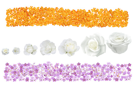 yarrow: Banner with Purple Heliotrope flower, orange yarrow achillea and white rose  isolated over background