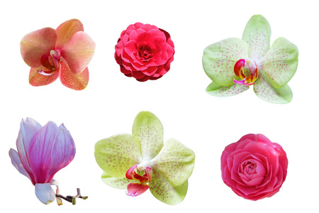Spring flowers set of orchid, magnolia, camellia isolated on white background Reklamní fotografie