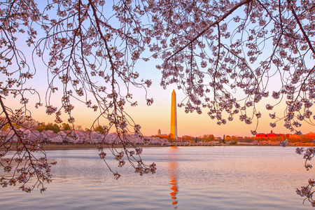 Cherry blossom around the Tidal Basin with  in Washington DC, USA