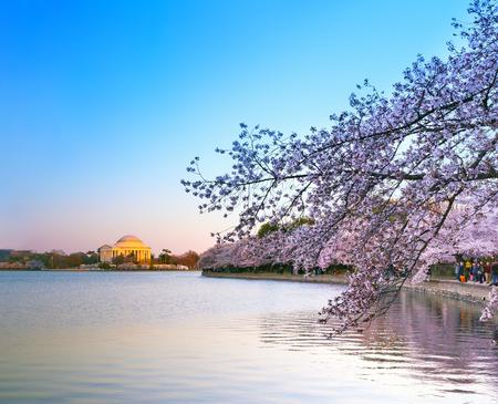 Tidal Basin and Jefferson Memorial during Cherry Blossom Festival at the sunset Reklamní fotografie