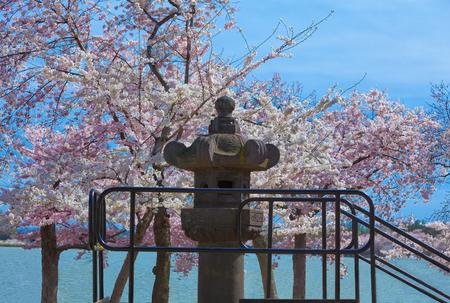 Stone Statue Japanese  Lantern on the Tidal Basin in Washington DC during the Cherry Blossom Festival 版權商用圖片