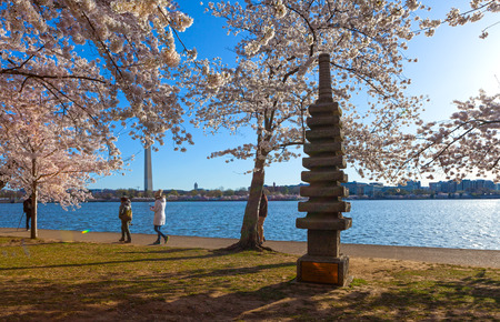 WASHINGTON DC - APRIL 8, 2018: The Japnaese Pagoda Monument nestled in among the cherry trees on the bank of the Tidal Basin during Cherry Blossom Festival