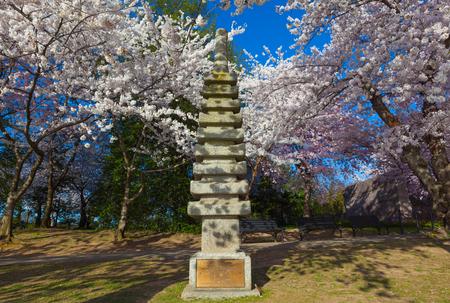 Cherry blossom tree and the Japanese stone Pagoda (Temple) gifted by Ryozo Hiranuma to Washington CD, in 1957