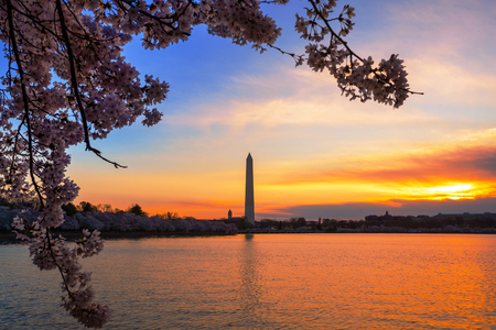 Early Morning at Tidal Basin in Washington DC, during the Cherry Blossom Festival with monument on other side.