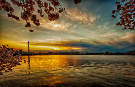Panorama with a wide-angle lens part of tidal basin at the sunrise during the Cherry Blossom Festival 版權商用圖片