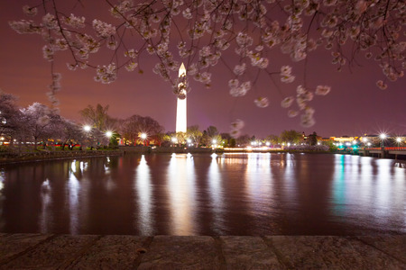 Washington Memorial illuminated  at night with cherry blossom blurry by the wind, reflecting in the water of the Tidal Basin 版權商用圖片