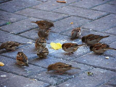 Las aves pequeñas se alimentan en el parque Foto de archivo - 32780379