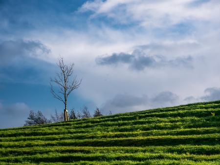 lonley: Field,  Lonley tree and blue sky in autumn
