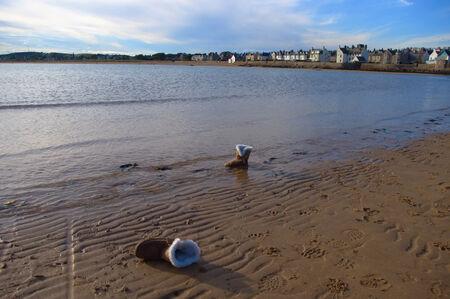 samui: Sea Bay in the Scotland, empty beach