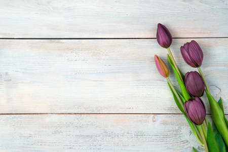 Festive background with purple tulips on a light wooden background. Top view with space to copy. Concept of holidays, March 8.