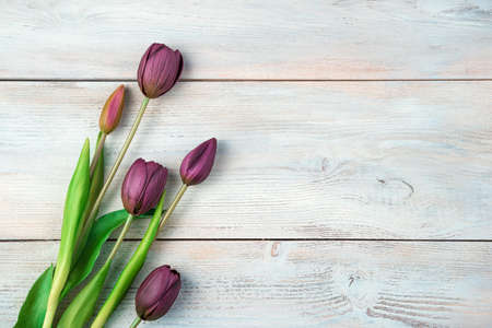 March 8, festive background with tulips on a light wooden background. Top view with space to copy. Standard-Bild