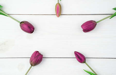 Five purple tulips are arranged in a circle on a white wooden background. Top view, with space to copy. Concept of festive backgrounds, March 8, spring.