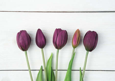 Five purple tulips on a white wooden background. Top view, with space to copy. Concept of festive backgrounds, March 8.