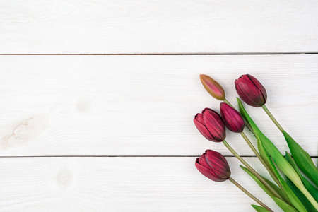 Red tulips on a light natural background. Top view, with space to copy. Concept of March 8, spring. Standard-Bild