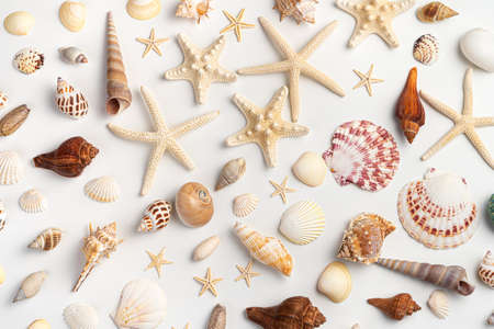 Sea background with a variety of shells, clams and starfish on a light background. Top view, horizontal.
