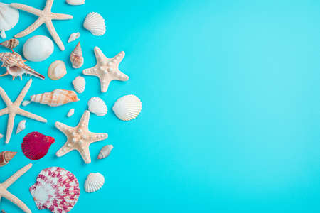 Beautiful seashells and starfish on a light blue background. Horizontal view, copy space.