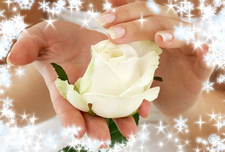 christmas manicure: beautiful woman hands with rosebud and snowflakes Stock Photo