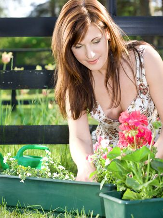bright picture of lovely housewife potting plants Stock Photo - 3199819