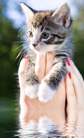 female hands holding little kitty above water