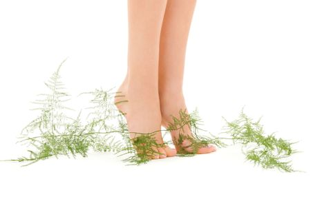 picture of female legs with green plant over white Stock Photo - 4670103