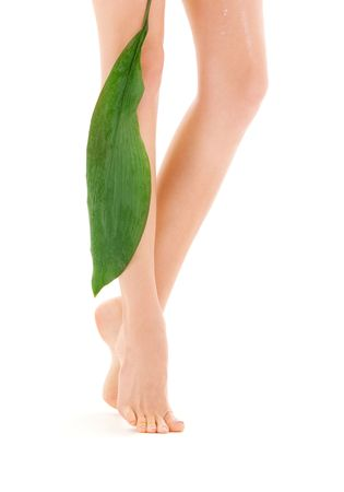 picture of female legs with green leaf over white Stock Photo - 4817129