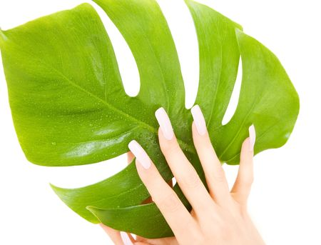 picture of female hands with green leaf over white Stock Photo - 4835787