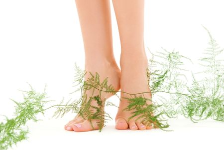 picture of female legs with green plant over white Stock Photo - 4918273