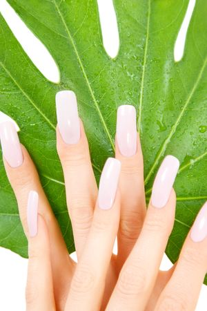 picture of female hands with green leaf over white Stock Photo