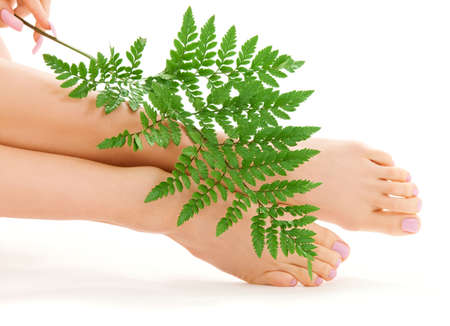 picture of female feet with green fern leaf over white Stock Photo - 4994874