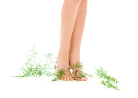 picture of female legs with green plant over white Stock Photo - 5196879