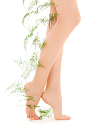 picture of female legs with green plant over white Stock Photo - 5196904