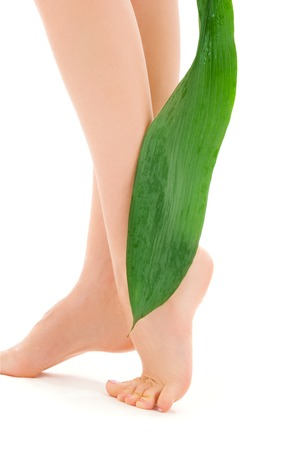 picture of female legs with green leaf over white Stock Photo - 5196940