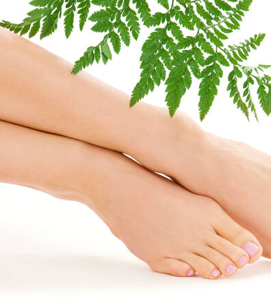 fern  large fern: picture of female feet with green leaf over white
