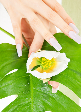 picture of female hands with green leaf and flower Stock Photo - 5348536