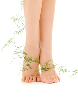 picture of female legs with green plant over white Stock Photo - 5348269