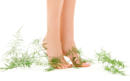 picture of female legs with green plant over white Stock Photo - 5660059