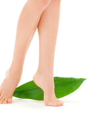 picture of female legs with green leaf over white Stock Photo - 5676864